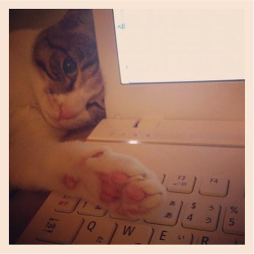 neko 1 「猫よ…どうしてそこで寝るのだ…」猫飼いあるある10選