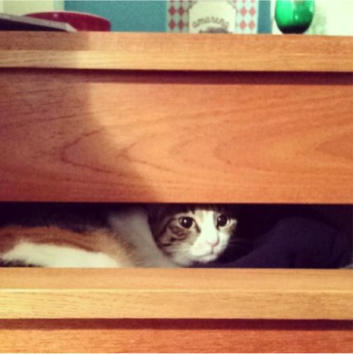 neko 3 「猫よ…どうしてそこで寝るのだ…」猫飼いあるある10選