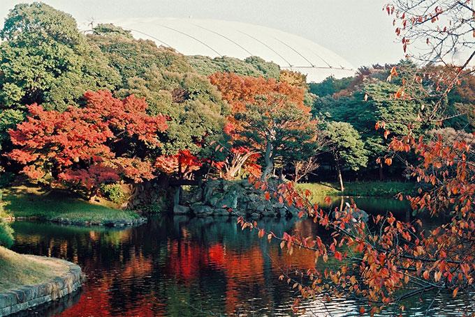 c8206936781390c2b2f185e595c982cb 自然な「涼」を楽しもう。東京都内のひんやりスポット5選